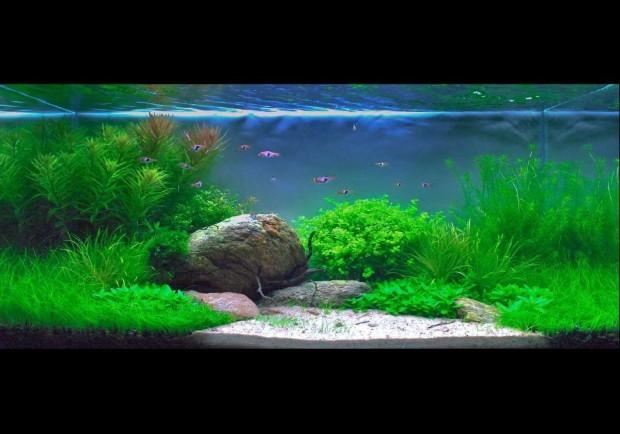 Jak Nawozić Akwarium Roślinne Mikro Makro Co2 I światło