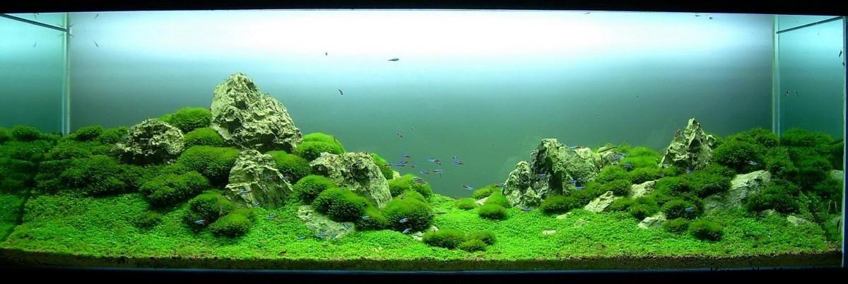 akwarium-aqua-design (9)