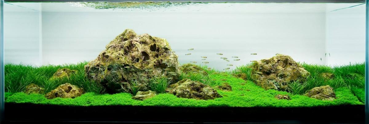 akwarium-aqua-design (8)
