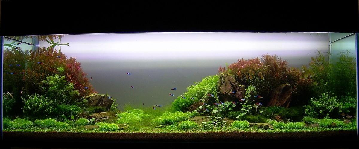 akwarium-aqua-design (7)