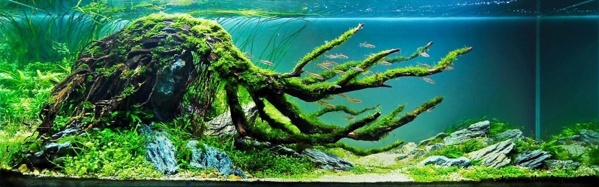 akwarium-aqua-design (5)