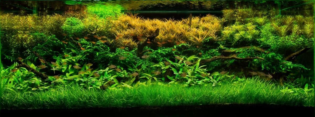 akwarium-aqua-design (4)