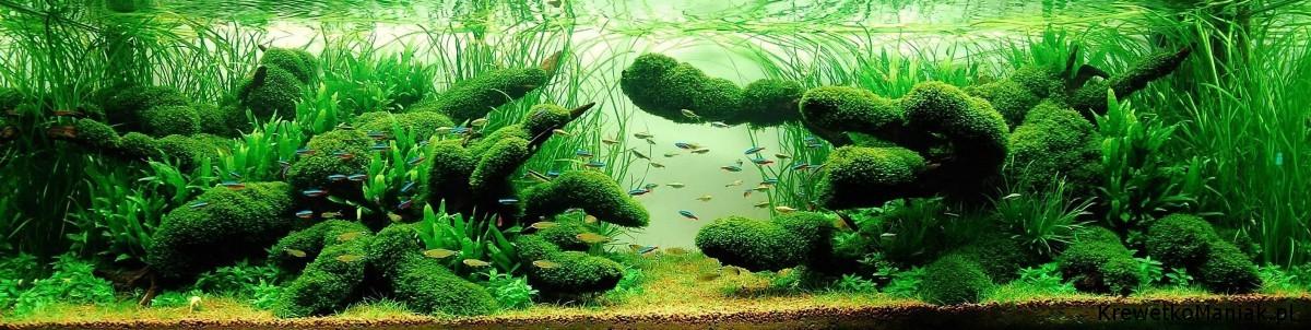 akwarium-aqua-design (3)