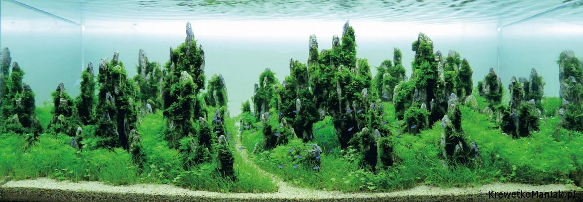 akwarium-aqua-design (2)