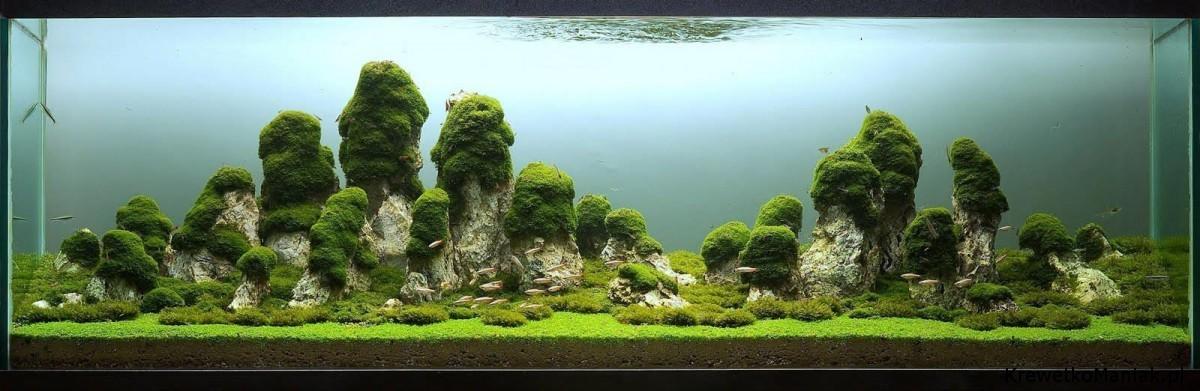 akwarium-aqua-design (1)