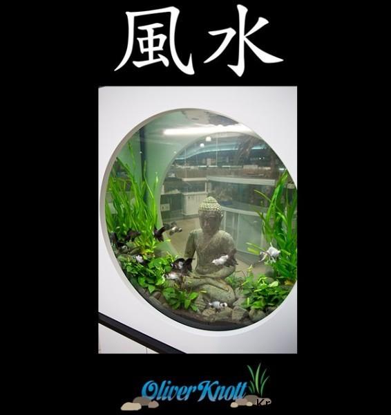 Budda w akwarium (8)