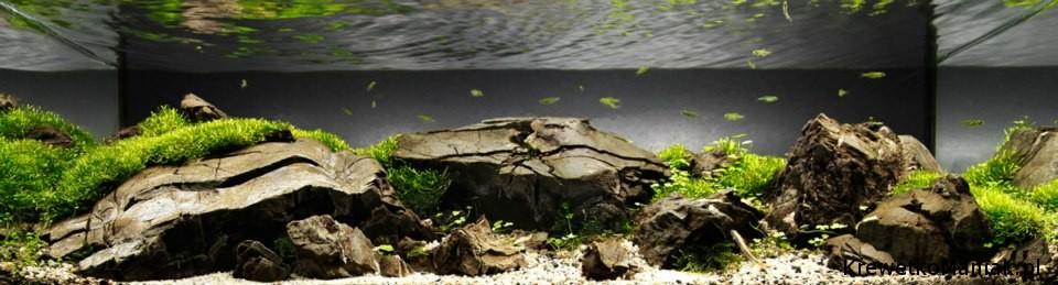 akwarium-aqua-design (38)