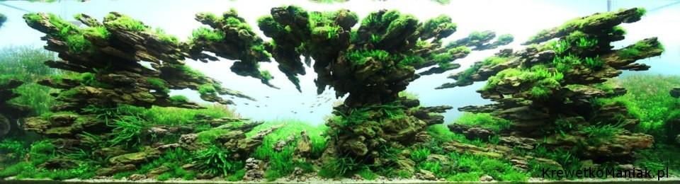 akwarium-aqua-design (37)