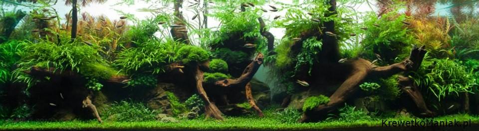 akwarium-aqua-design (28)