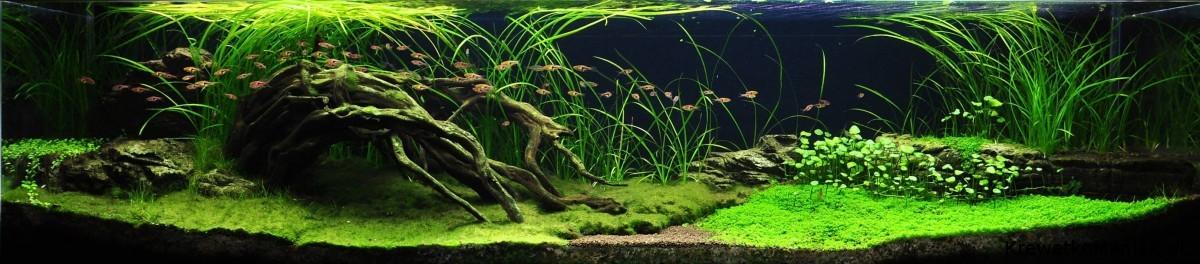 akwarium-aqua-design (27)