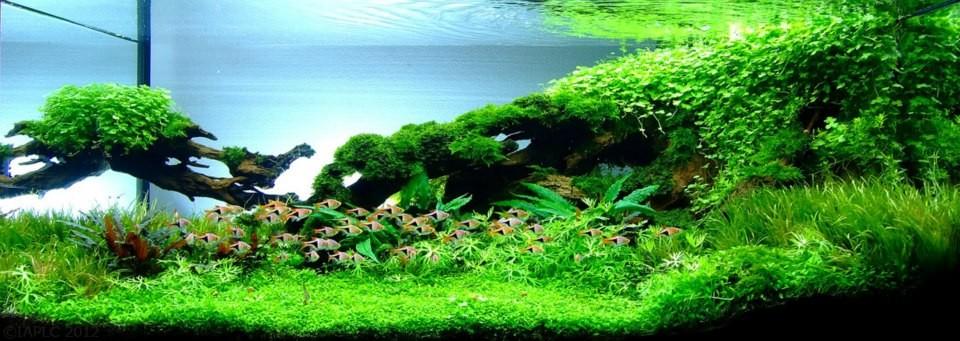 akwarium-aqua-design (25)