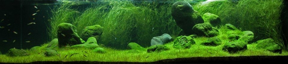 akwarium-aqua-design (24)