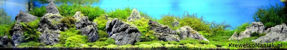 akwarium-aqua-design (22)