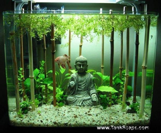 Budda w akwarium (3)
