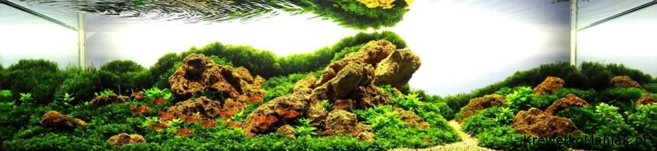 akwarium-aqua-design (20)