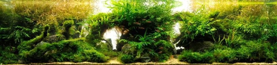 akwarium-aqua-design (36)