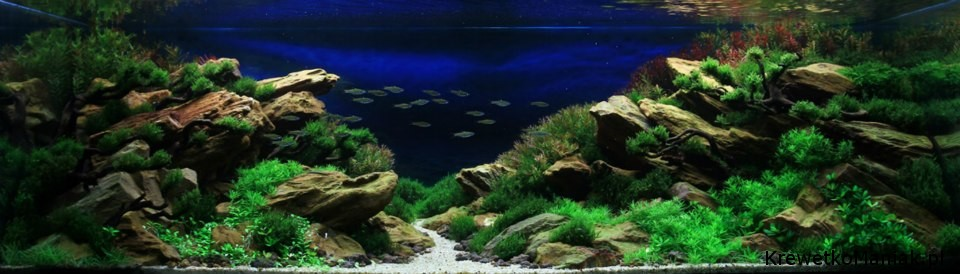 akwarium-aqua-design (35)