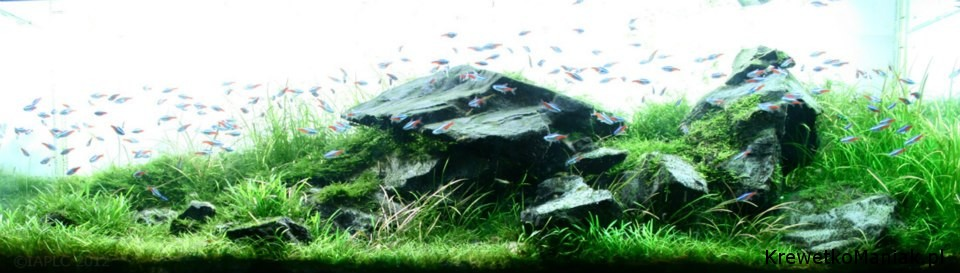 akwarium-aqua-design (19)