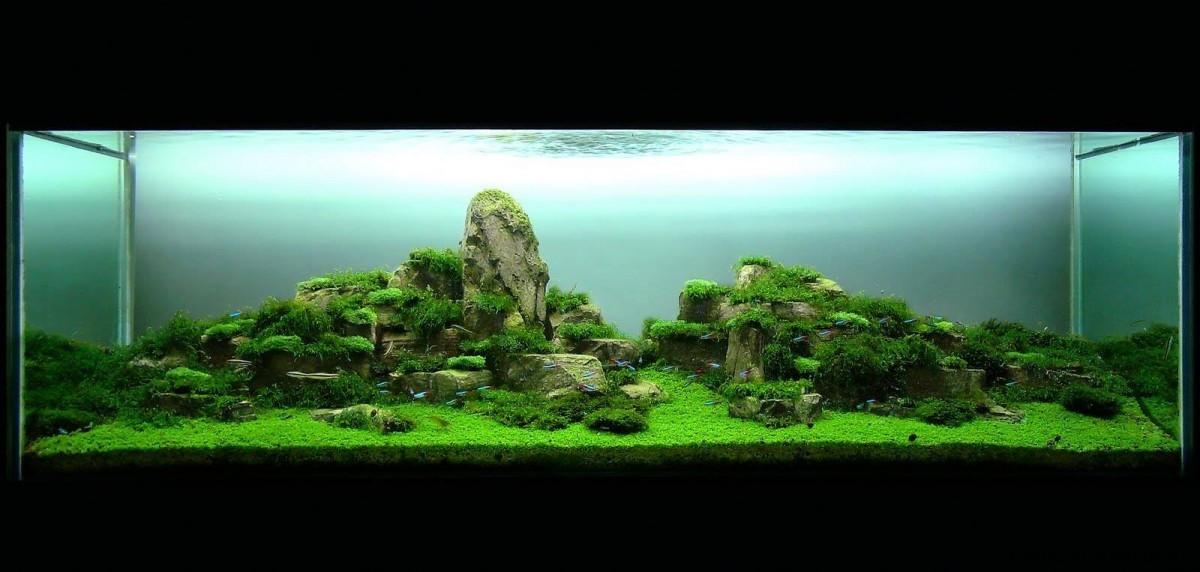 akwarium-aqua-design (17)