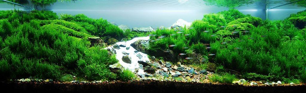 akwarium-aqua-design (16)