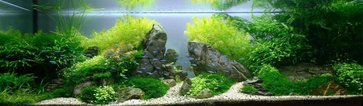 akwarium-aqua-design (14)