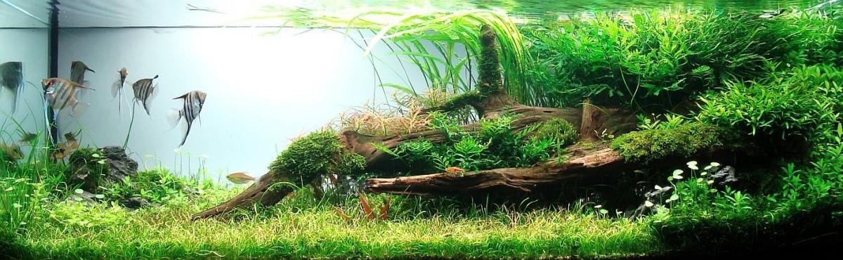 akwarium-aqua-design (13)