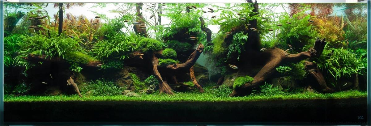 akwarium-aqua-design (40)