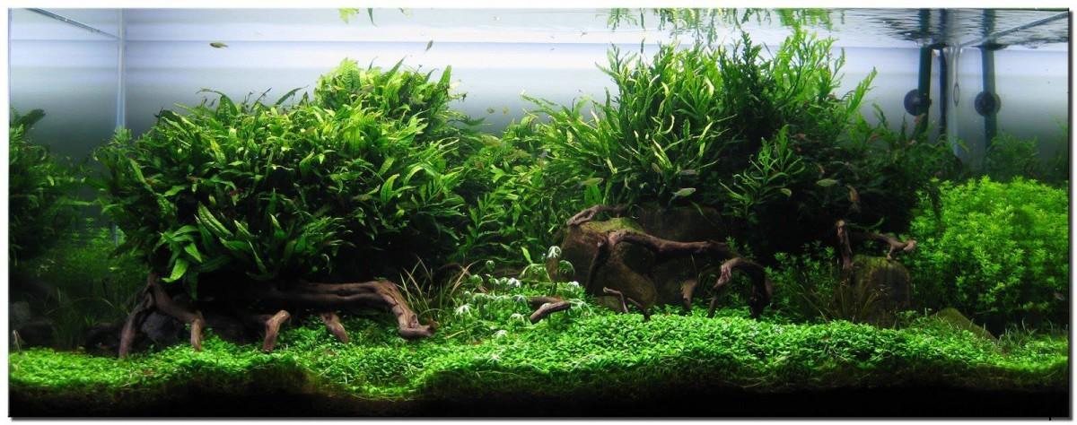 akwarium-aqua-design (12)