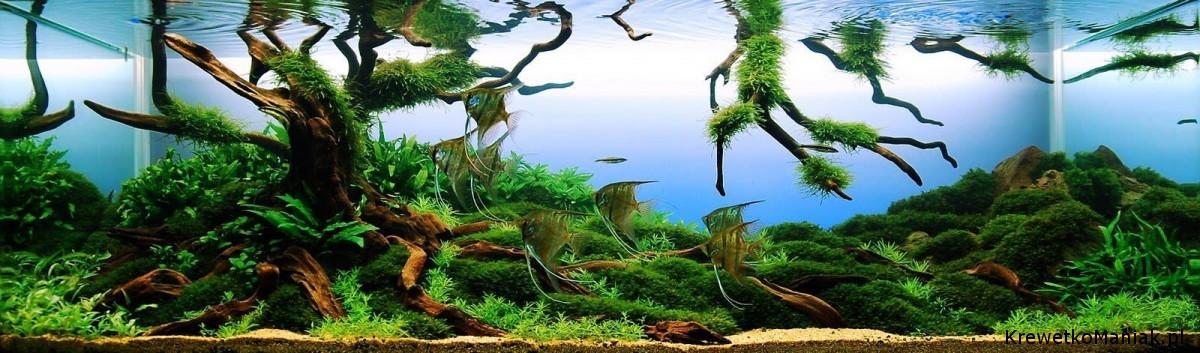 akwarium-aqua-design (11)