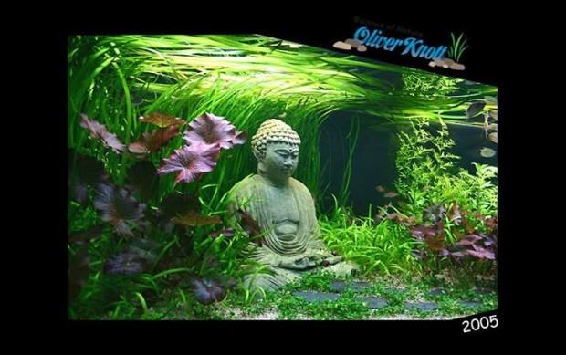 Budda w akwarium (2)