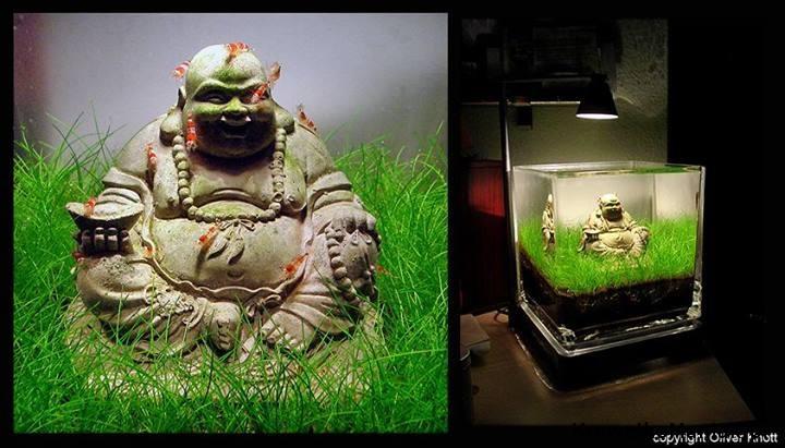 Budda w akwarium (1)