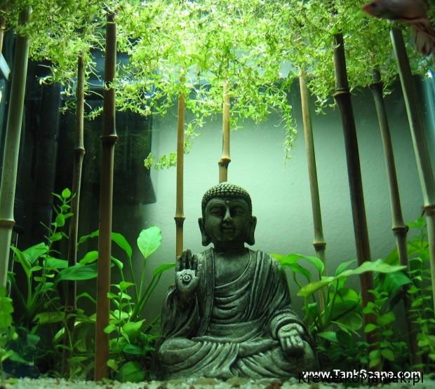 Budda w akwarium (11)