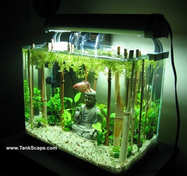 Budda w akwarium (10)